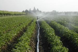 Сельскохозяйственный полив